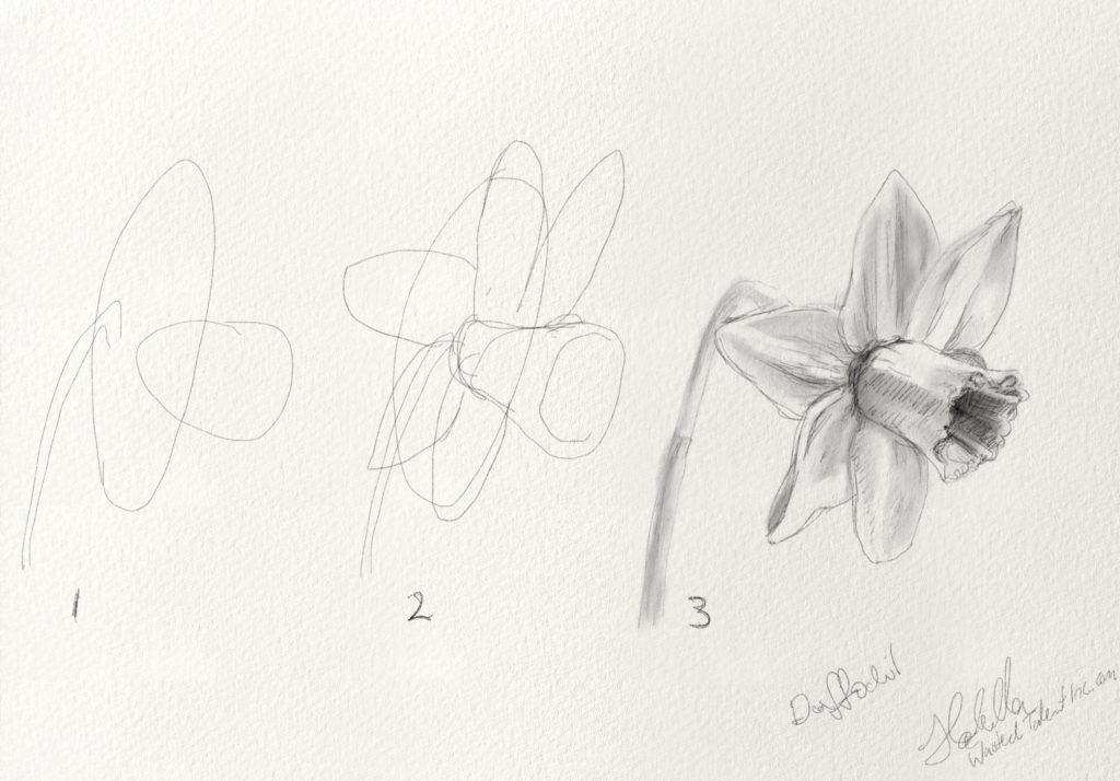 How to draw a Daffodil flower