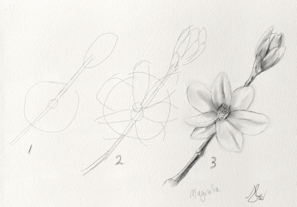 How to draw a Magnolia flower
