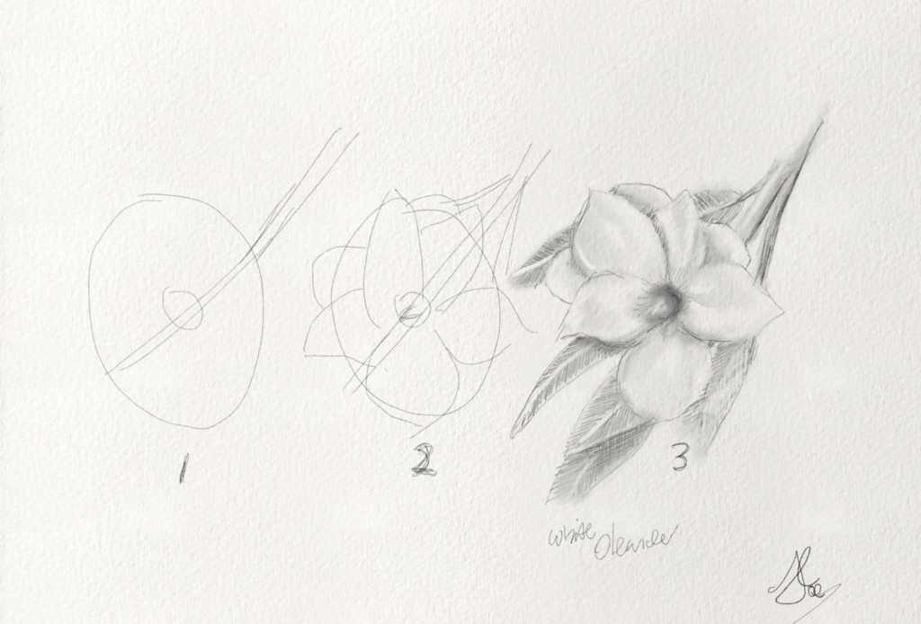 How to draw a white Oleander